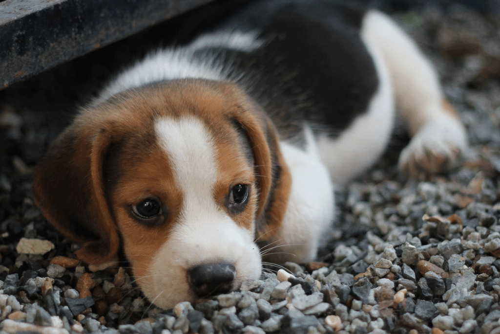 Pet Trusts: Protecting Your Pet After Your Death